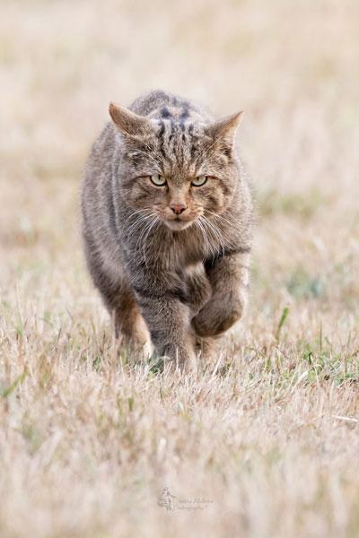 cristina-abilleira-gato-montes
